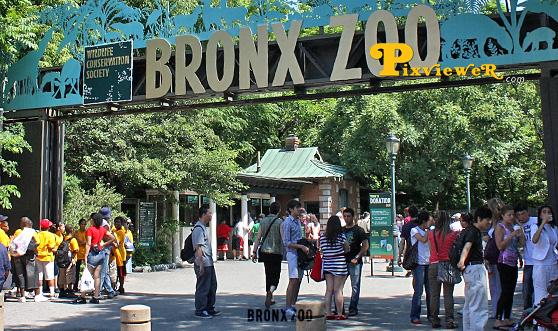 Info on Fordham Bronx 2
